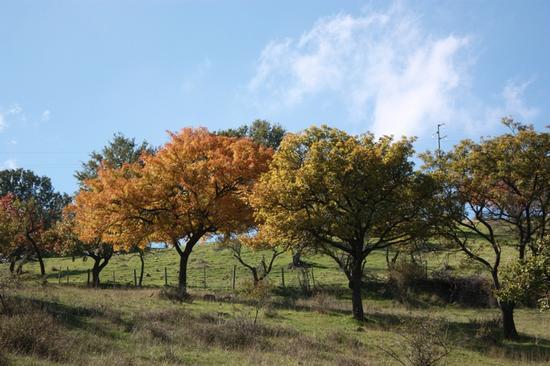 L'autunno - Maniace (2651 clic)