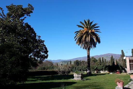 Castello Nelson Maniace: La villa (2673 clic)