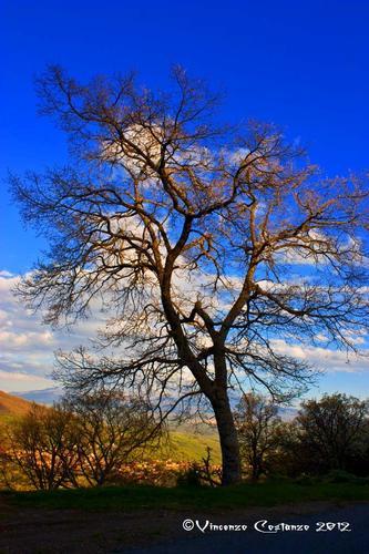 L'albero - Maniace (2760 clic)