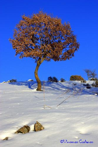 Albero solitario - Maniace (2222 clic)