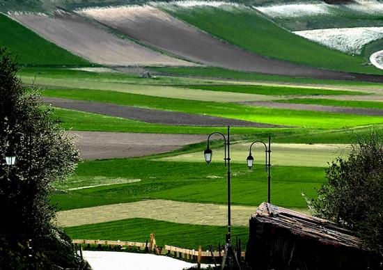 Primavera a Castelluccio  (5983 clic)