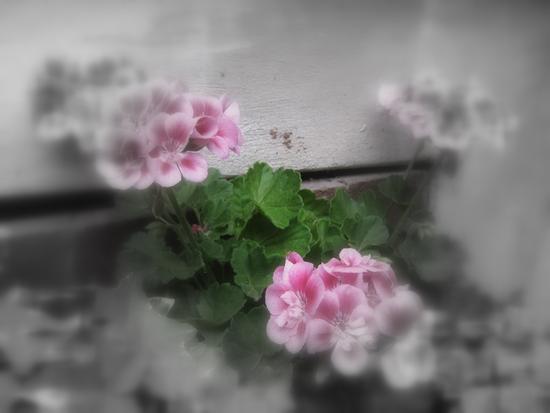 Pink (473 clic)