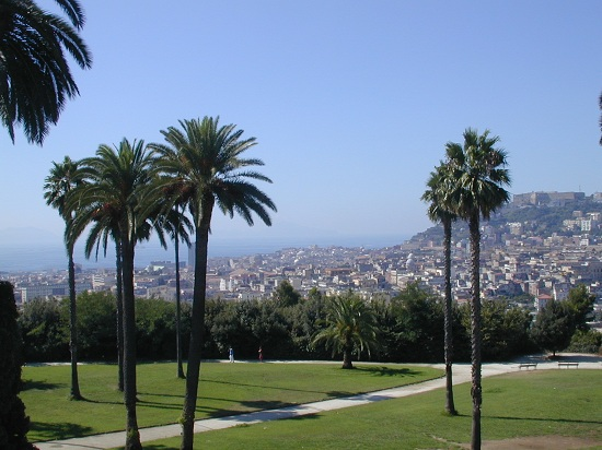 Palme da Napoli (2665 clic)