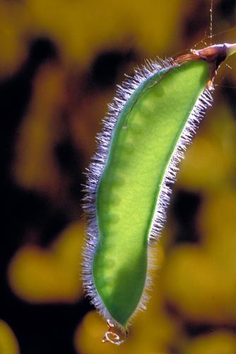Germoglio - Santo stefano in aspromonte (2045 clic)