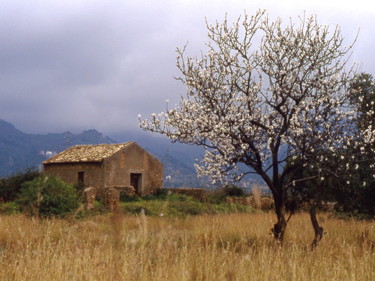 Inizio di primavera - Reggio calabria (4076 clic)