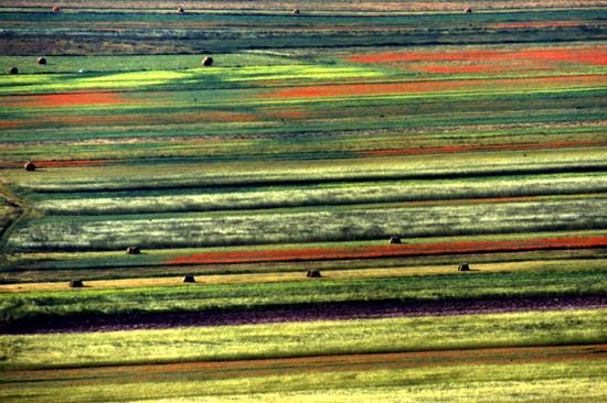 La natura a colori - Castelluccio (2600 clic)