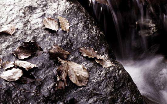 Foglie morte - Santo stefano in aspromonte (2437 clic)