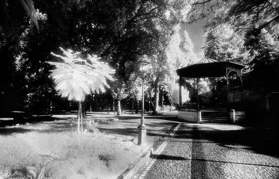 COSENZA - VILLA COMUNALE (3623 clic)