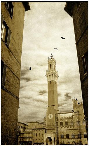 Siena  (1213 clic)