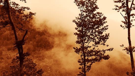Nebbia - Fiumefreddo bruzio (839 clic)