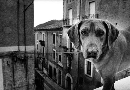 VITA RANDAGIA - Mormanno (3305 clic)