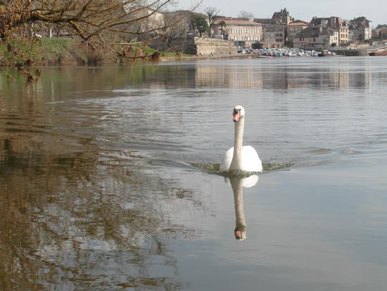 Giulio sulla Dordogne, sullo sfondo  Bergerac - San secondo parmense (810 clic)