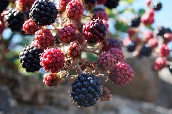 more - Pantelleria (4542 clic)