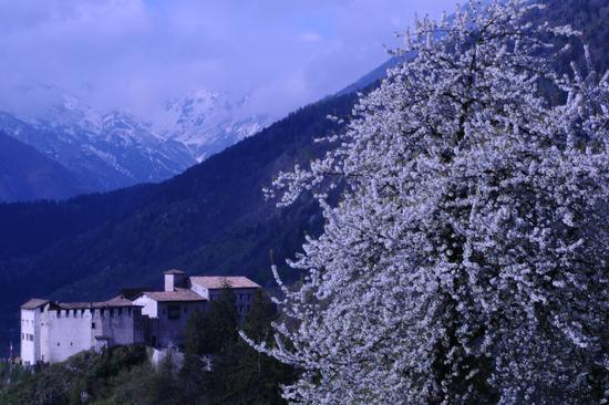 é primavera - Stenico (2153 clic)