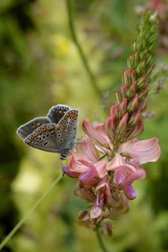 Farfallina -  - inserita il 26-Aug-13