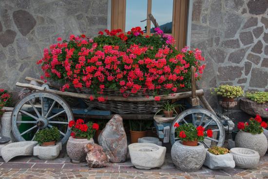 il carro - San lorenzo in banale (953 clic)