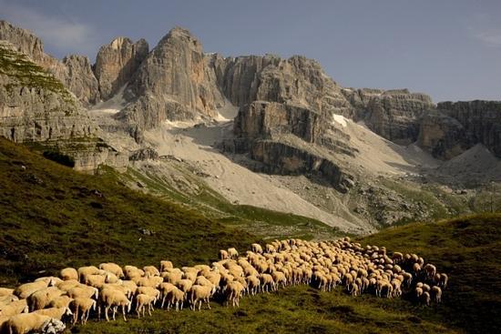 al pascolo in val Ambiez - San lorenzo in banale (1092 clic)