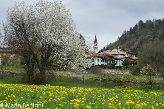Primavera a San Lorenzo - San lorenzo in banale (606 clic)