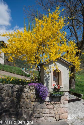 Capitello di Berghi - San lorenzo in banale (552 clic)