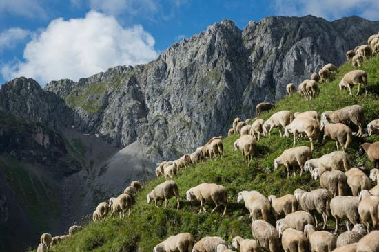 al pascolo in val Ambiez - San lorenzo in banale (960 clic)