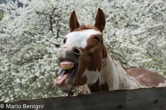 Cavallo a Senaso - SAN LORENZO IN BANALE - inserita il 11-May-15