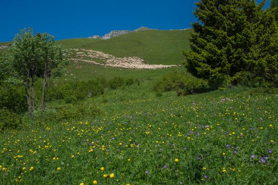 al pascolo in località Prada - San lorenzo in banale (698 clic)
