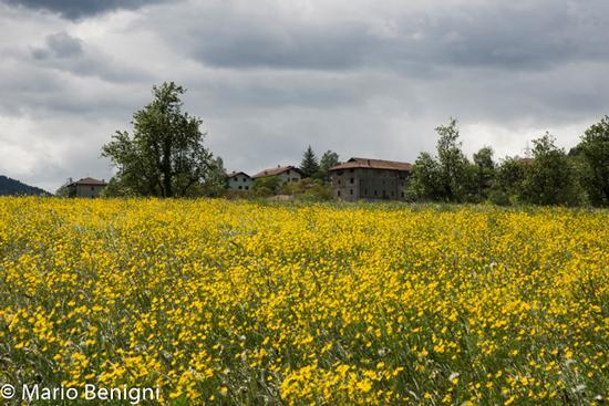 Primavera a Sclemo - Stenico (741 clic)