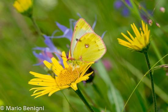 i colori della natura - San lorenzo in banale (481 clic)