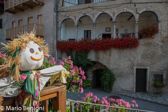 fioriture nella frazione Prusa - San lorenzo in banale (701 clic)