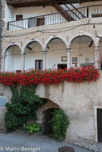 fioriture nella frazione Prusa - San Lorenzo in Banale - inserita il 23-Jul-15