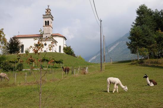 località Deggia - San lorenzo in banale (1550 clic)