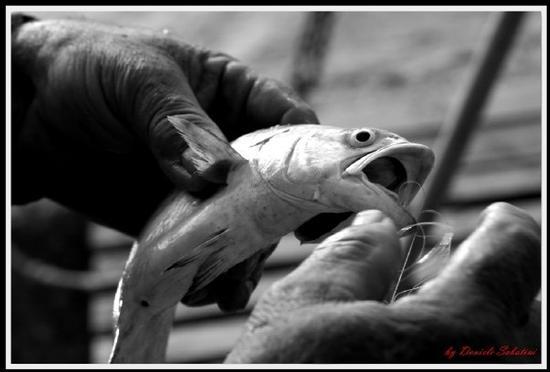 Togliere i pesci dalle reti.. - Vasto (1914 clic)