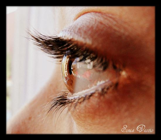 reflected in the eye (677 clic)