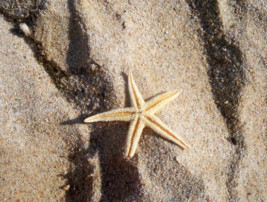 stella marina (643 clic)