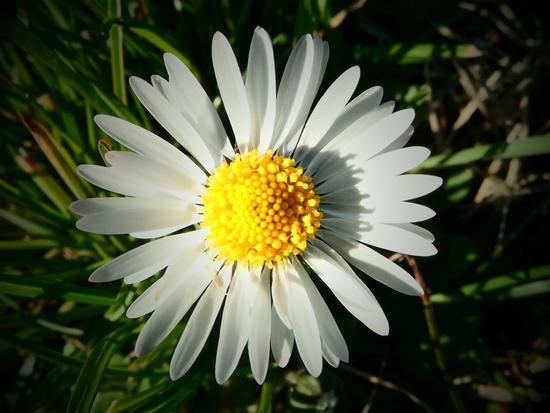 profumo di primavera... - Olbia (1965 clic)