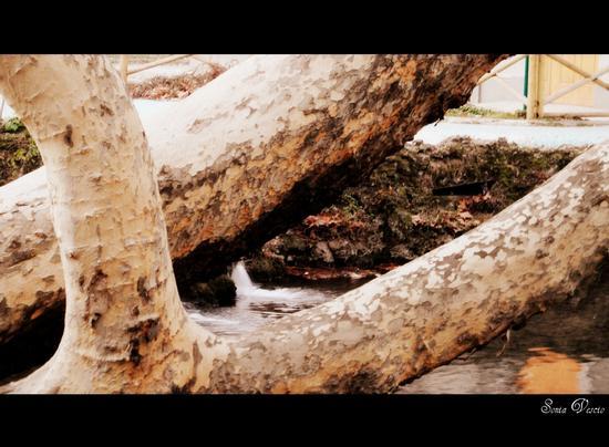 la voce della natura... (483 clic)