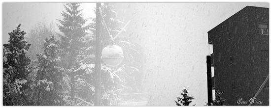 Bianco Natal.... (541 clic)