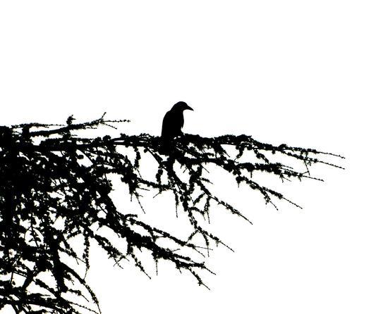 ombre (791 clic)