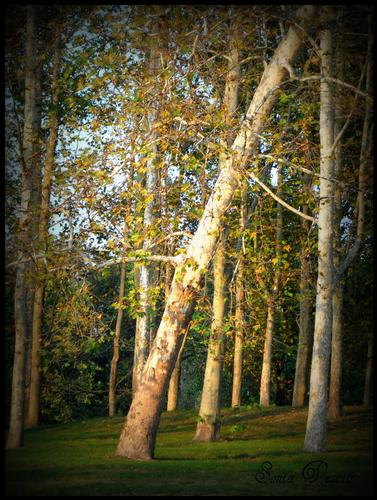 i magici colori dell'autunno... (541 clic)