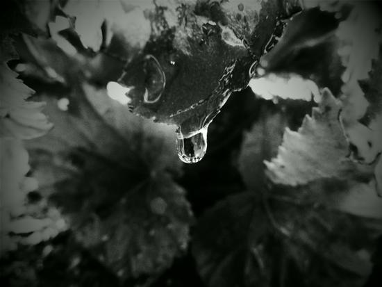 goccia di pioggia.. - Milano (1487 clic)