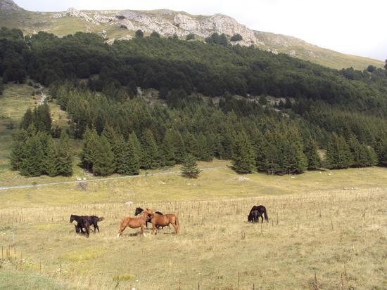 Cavalli in libertà - Farindola (2135 clic)
