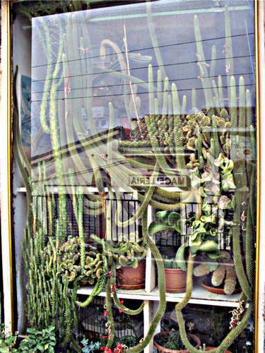Piante e riflessi alla finestra - Villa celiera (1323 clic)