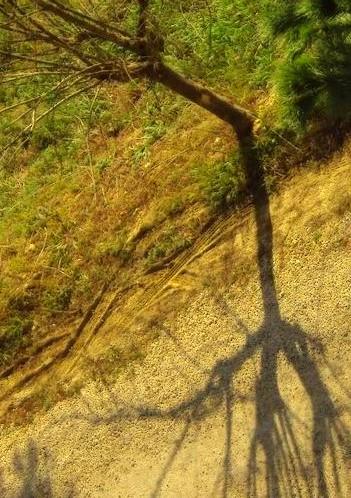 L'ombra dell'albero alla finestra - Spoltore (959 clic)