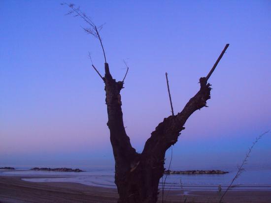 Albero spoglio sulla spiaggia - Montesilvano marina (1299 clic)