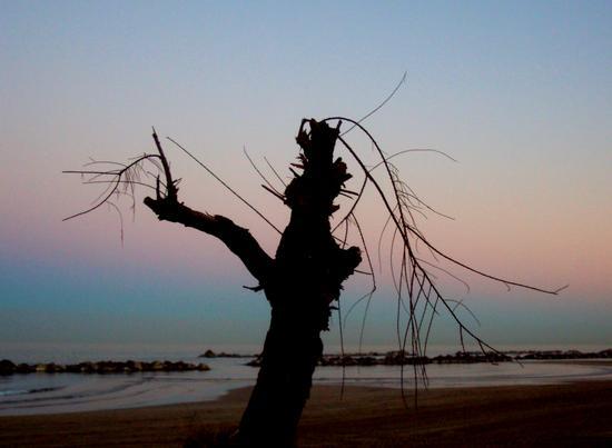 Albero spoglio al tramonto - Montesilvano marina (1264 clic)