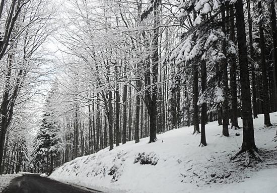 Neve nel bosco - Corno alle scale (2007 clic)