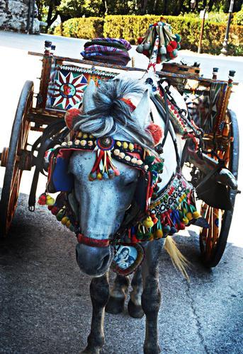 Povero cavallo siciliano... - Erice (2488 clic)