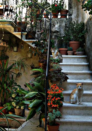 gatti sulle scale - Erice (2476 clic)