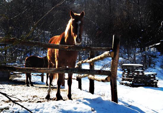 Cavallo curioso (513 clic)