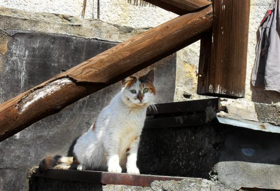 Il gatto osservatore... - Montechiarugolo (1974 clic)